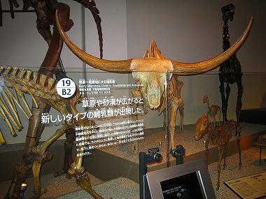 国立科学博物館41