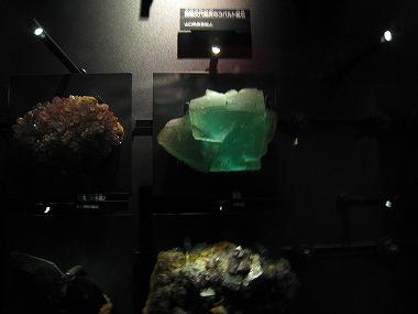 国立科学博物館42