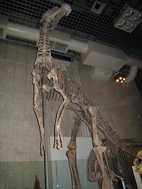 国立科学博物館43