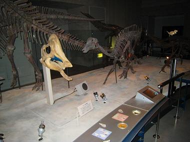 国立科学博物館44