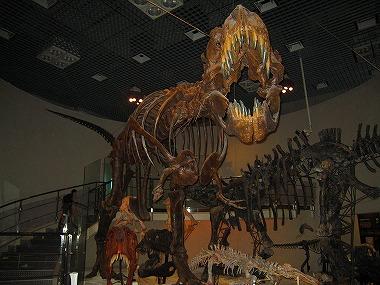 国立科学博物館47