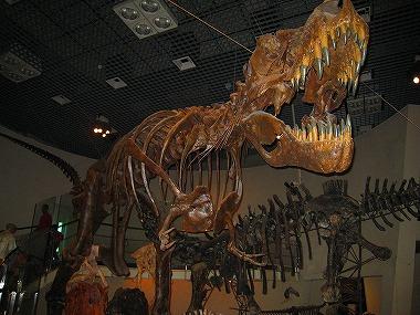 国立科学博物館48
