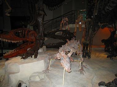 国立科学博物館49