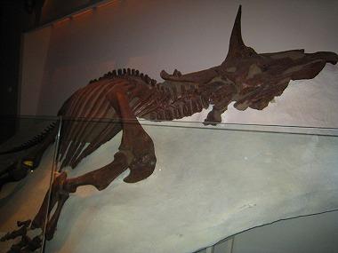 国立科学博物館53