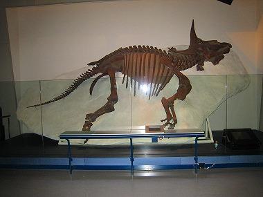 国立科学博物館54
