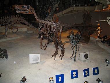 国立科学博物館57