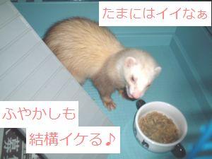 fuya3.jpg