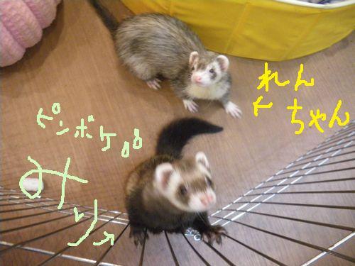 renchanmmchan.jpg