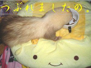 tohfu2.jpg