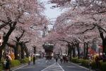 桜祭り。春