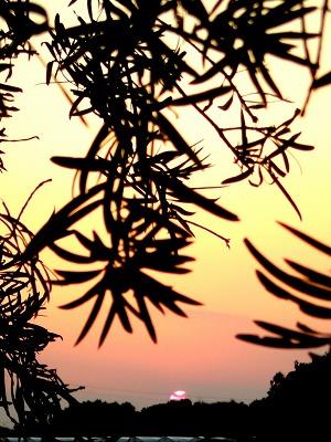 2008 3 25 夕陽