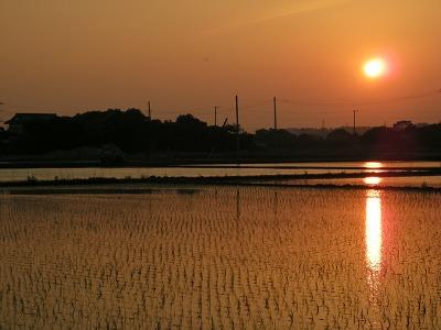 田園からの夕日2