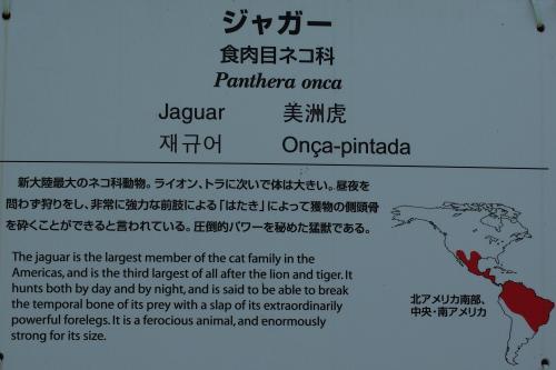 東山動物園_ジャガー_食肉目ネコ科