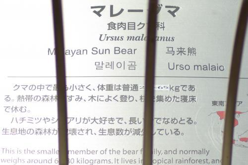 東山動物園_マレーグマ_食肉目クマ科