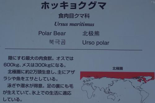 東山動物園_ホッキョクグマ_食肉目クマ科
