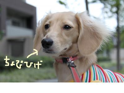 snap_dog0810_20099322229.jpg