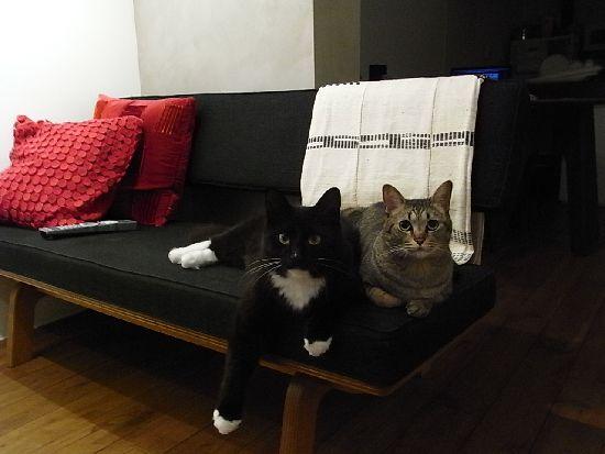 モコ&ニコ