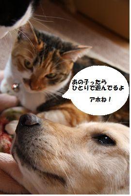 2_20090129202141.jpg