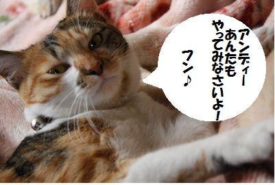 4_20090129201612.jpg