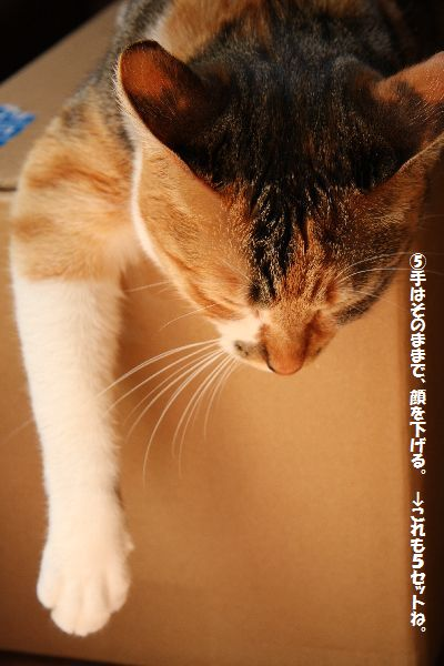 IMG_2294_20090409162018.jpg