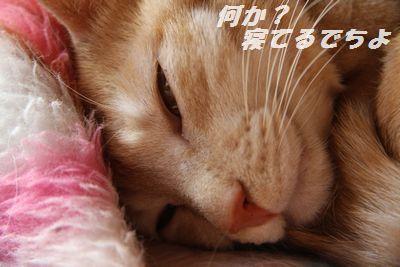 IMG_2392.jpg