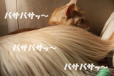 IMG_2637.jpg