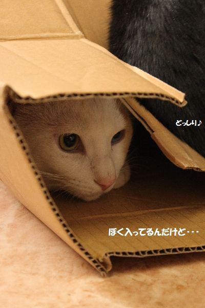 IMG_3777_20090915192935.jpg