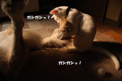 IMG_4288.jpg