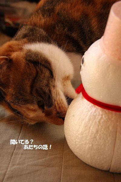 IMG_7247_20090305194612.jpg