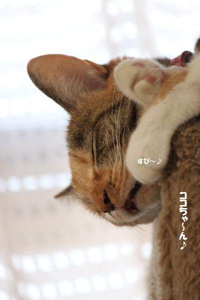 IMG_8070.jpg