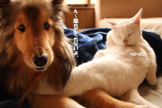 IMG_8980.jpg