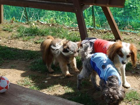 小型犬パラダイス