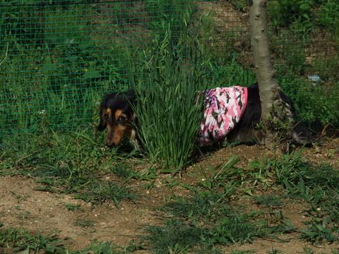 服横から。 草葉の陰で……って縁起でもない!