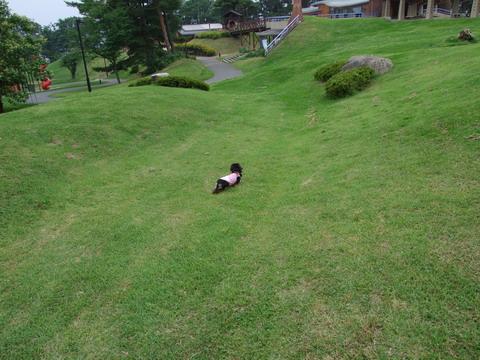 大草原の小さな犬?
