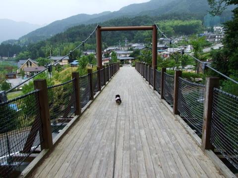 吊り橋もやっぱり平気