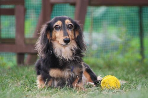 ボール番犬