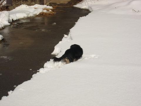 雪が結構溶けています
