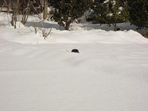 雪深く……埋まっています(笑