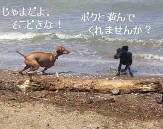 3_20081115180637.jpg