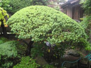 いちいの木