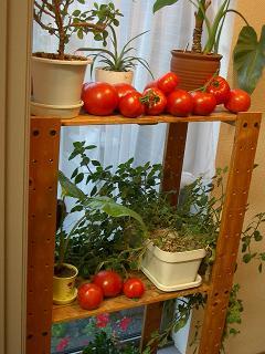 葡萄ロゴ・トマト 013 ブログ