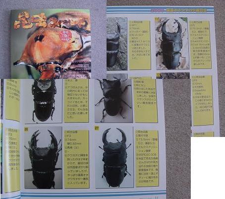 昆虫フィールド63号