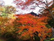 DSC_0345 (2)紅葉2011