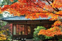 DSC_0344紅葉2011南禅寺