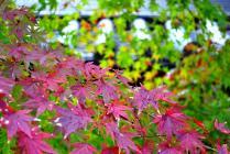DSC_0668紅葉2011永観堂