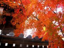 IMG_3272紅2011永観堂