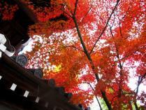 IMG_3255紅葉2011永観堂