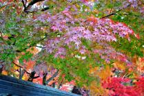 DSC_0703紅葉2011永観堂