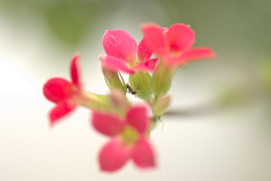 飛ばし加減 いっぱい 蟻