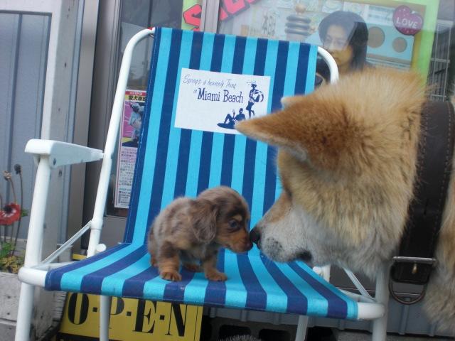 5月11日 新着子犬 088